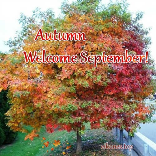 Pictures for September and autumn-eikones.top