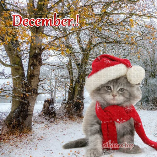 Top Images For December.!