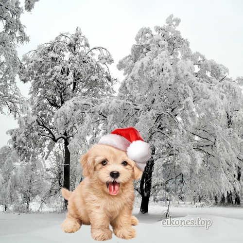 Χριστουγεννιάτικες Εικόνες Τοπ.!