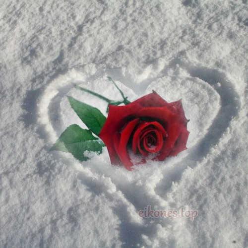 Καρδιές στο χιόνι με τριαντάφυλλα.!-eikones.top