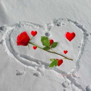 Καρδιές στο χιόνι με τριαντάφυλλα.!