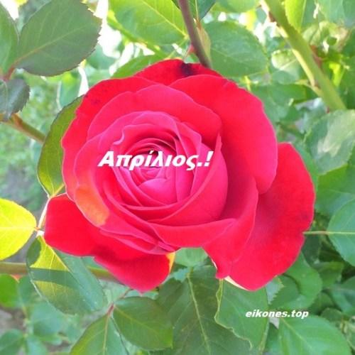Τα Τριαντάφυλλα Του Απρίλη. Καλό μήνα σε όλους!eikones.top