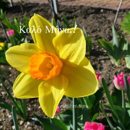 Καλημέρα Και Καλό Μήνα Με Εικόνες Της Άνοιξης.!
