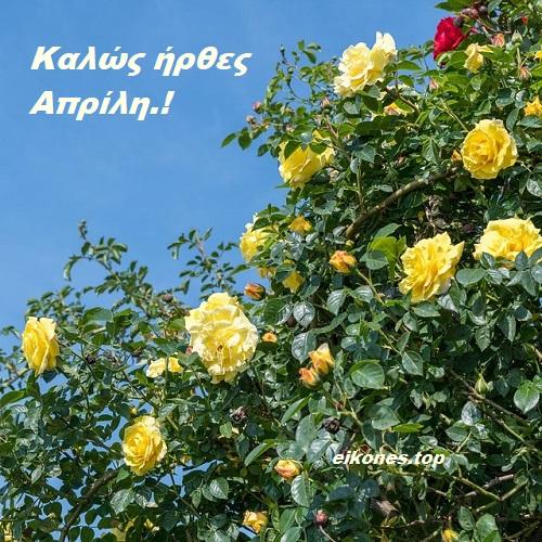 Καλό Απρίλη σε όλους με όμορφα Τριαντάφυλλα.!