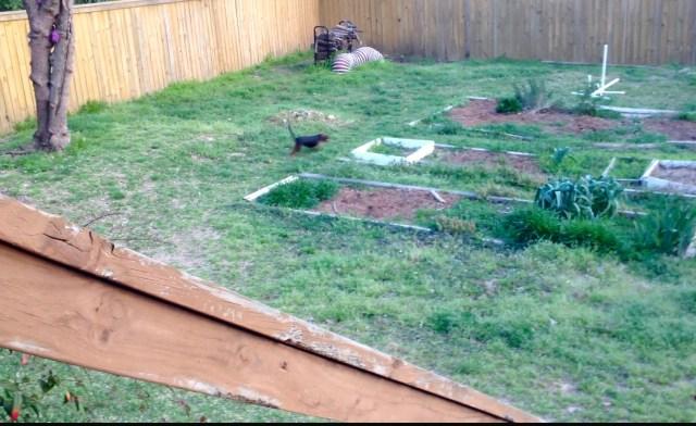 My non garden in 2013