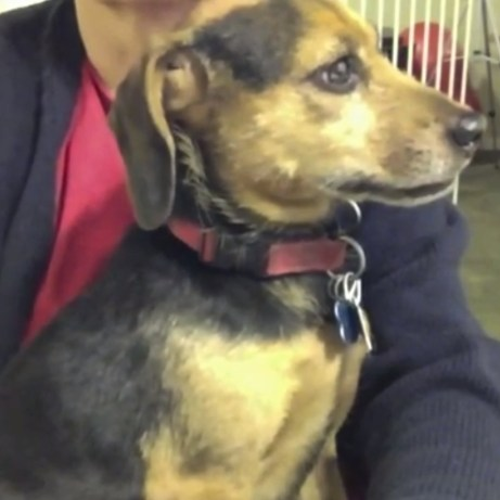 A small black and tan dog sits in a woman's lap. The dog's ears are back, her mouth is tight, her brow is very tight. She looks, and is, extremely afraid.