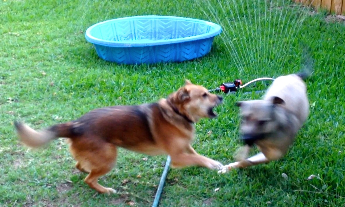 Clara (the blur on right) is mostly playing. Summer is not.