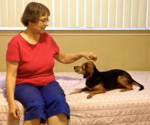 A woman and a small black and tan hound mix are sitting on a bed. The woman is holding a syringe (no needle) against the dog's back while the dog looks at her attentively. She is performing desensitization/counterconditioning for the application of topical flea medicine