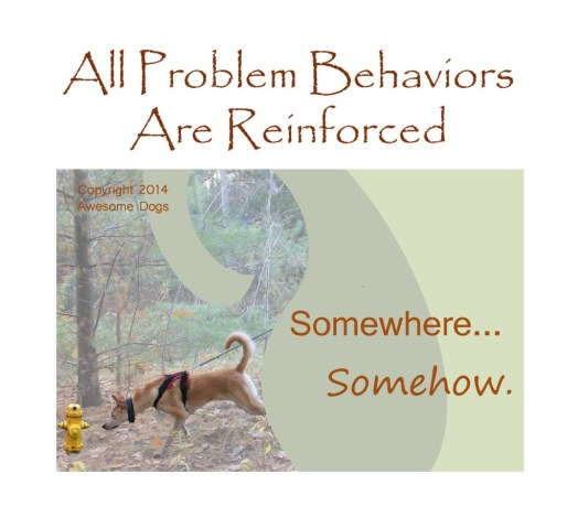 "Poster shows a dog stretching out, pulling a leash taut, in order to sniff a fire hydrant. Text says, ""All problem behaviors are reinforced. Somewhere...somehow."