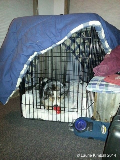Amos is comfy in his crate while at camp