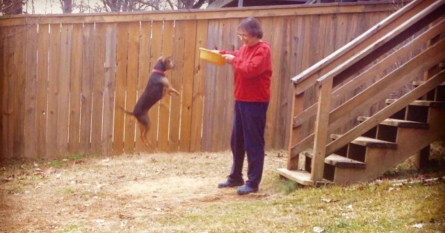 Small black dog leaping in front of a woman holding a plastic bowl. The bowl is part of the antecedent for the behavior.