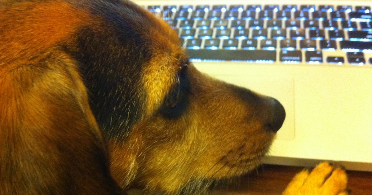 Will the Mystery Antecedent Please Stand Up? Closeup of a black and rust colored dog next to a laptop keyboard