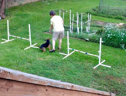 Eileen and little black hound dog Zani turning in an agility sequence