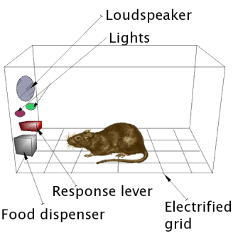 skinner box with rat inside. The box has a food dispenser, a floor with an electrified grid, an audio speaker, and lights that can blink