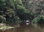 Canoe tours travel quietly