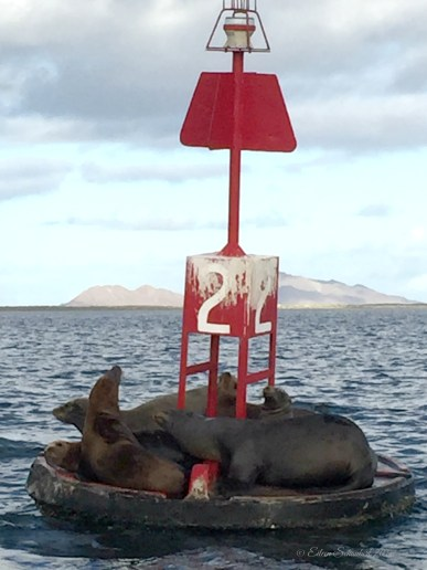 Sea Lions Hanging Out