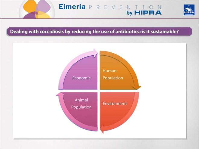 Dealing-with-coccidiosis-by-reducing-the-use-of-antibiotics