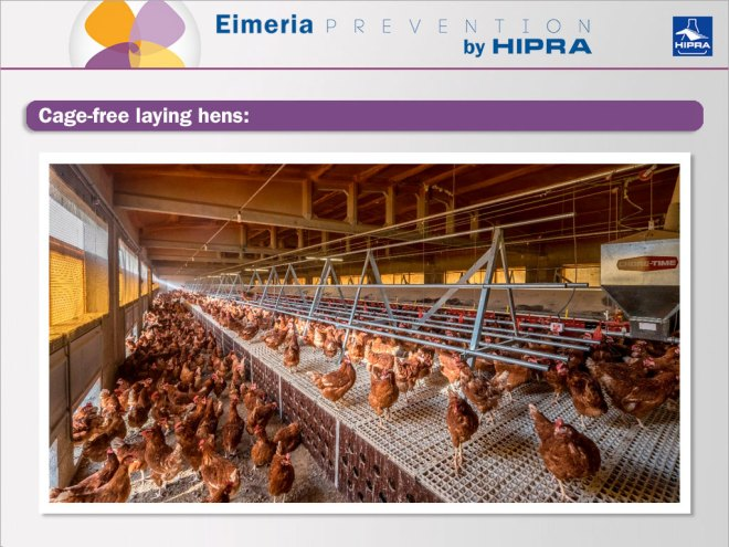 Coccidiosis caused by Eimeria is becoming more frenquent in free laying hens and semi-floor type rearing systems.