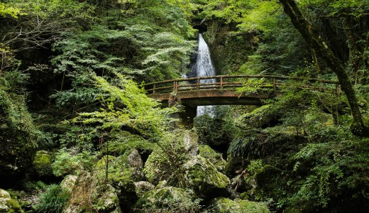 一枚絵のように美しい!津野町「長沢の滝」