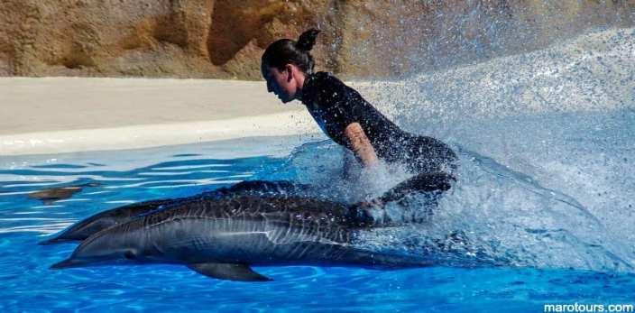عرض الدلافين بنات