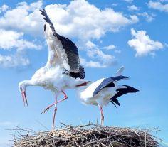 Storker