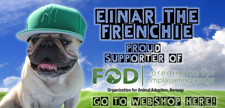 Einar The Frenchie