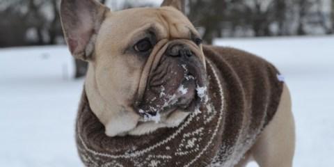 Hold hunden din varm i sprengkulda!