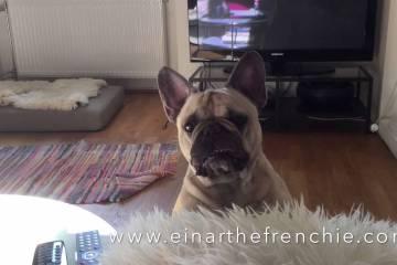 Hunden Einar kjefter på eierne sine