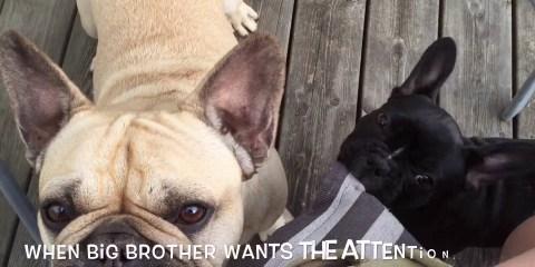 Det er ikke lett å være storebror
