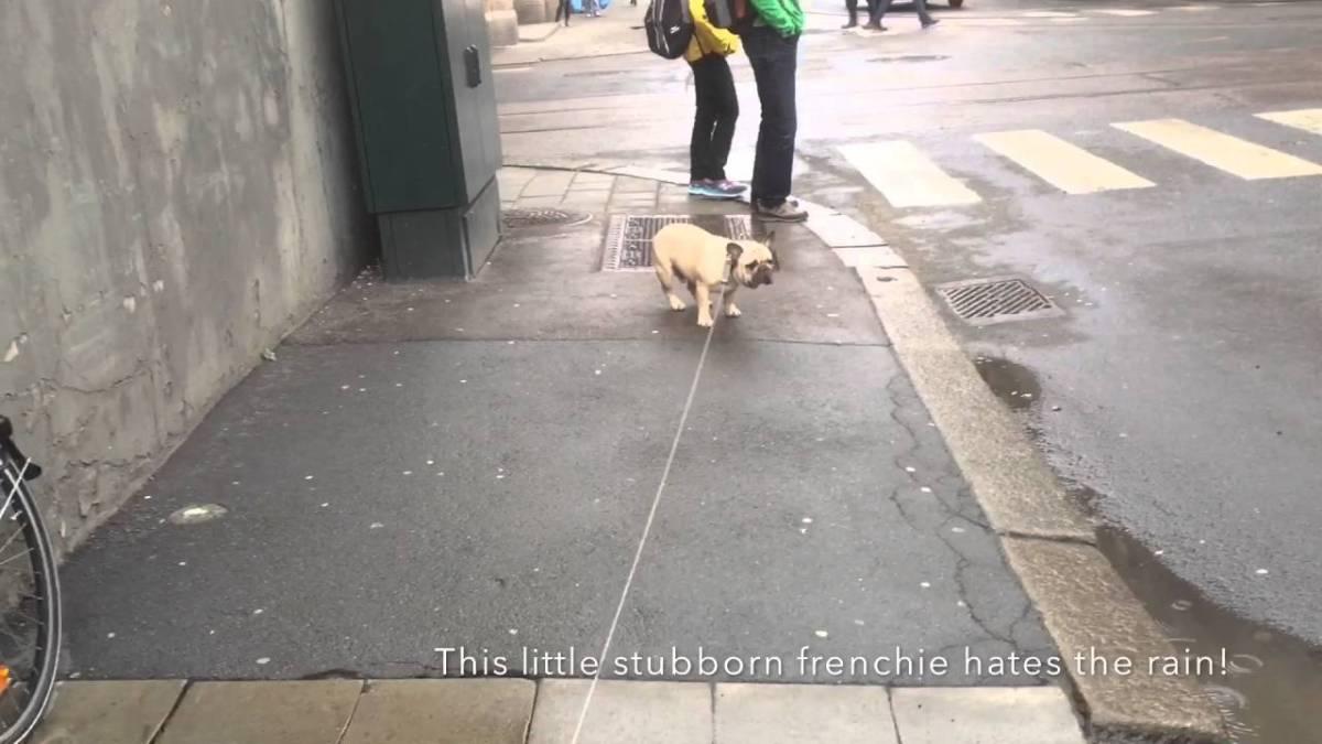 Vi ELSKER synet av en sta hund!