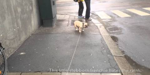 sta hund
