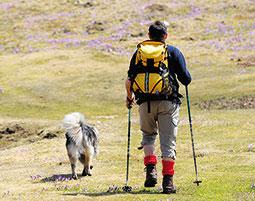 Husky Wander-Kurzurlaub am Rennsteig