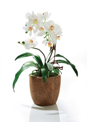 Die schöne Kunstorchidee überzeugt unter anderem durch den stilvollen Keramikübertopf. Übertopf aus Keramik, Maße: ca. Höhe 40 cm, Topf ca. Ø 15 x Höhe 13 cm, Gewicht: ca. 1,9 kg, Material: Kunststoff, Keramik.<br>
