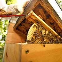 Besuch beim Imker mit Honig-Verkostung fuer 2