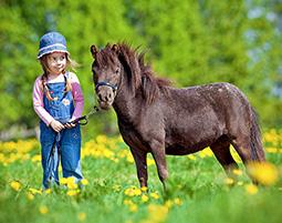 Riesenspass mit kleinen Pferden!
