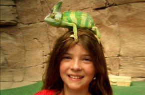 Schlange, Leguan und Co machen alle Kinder froh.