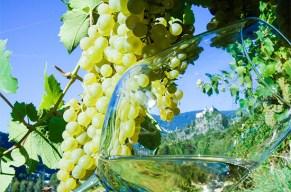 Weinkultur hautnah erleben!