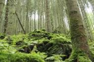 Im Tal der Feen bei Achouffe