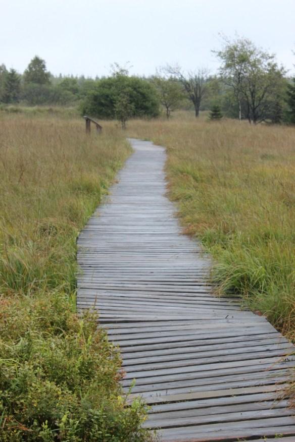 Ein Weg durchs Moor - Hohes Venn