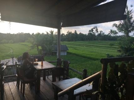 Blick auf die Reisfelder
