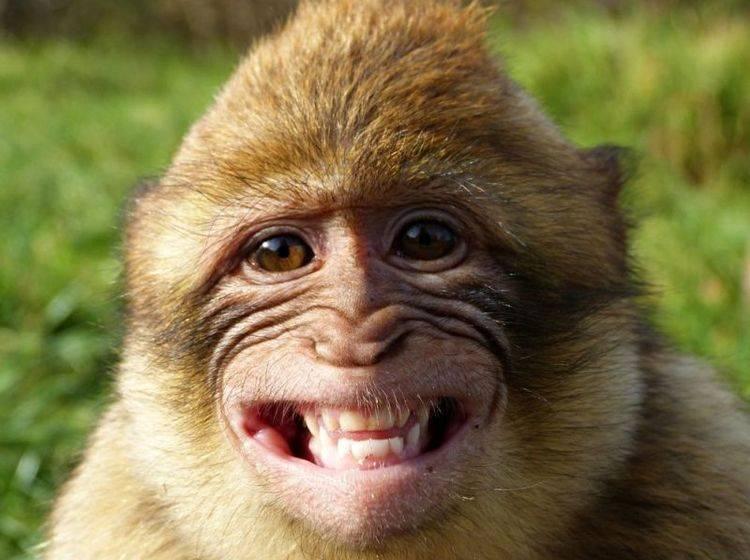 Tierischer Humor Konnen Tiere Gewollt Lustig Sein