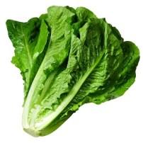 Lettuce - Lechuga