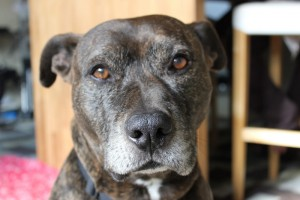 Pet Insurance for Landlords