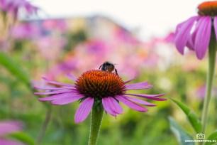 Insekt mit Blume