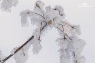 Winter13_2017