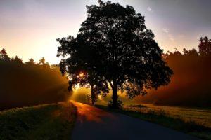 Herbstbaum / Sicherheitstipps für die dunklen Jahreszeit   Einkaufstrolley-Vergleich.de