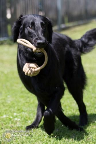 hundefuegen8