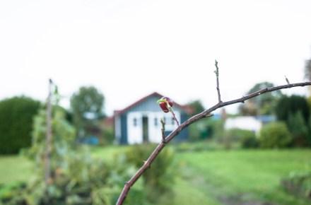 Garten im Oktober: Hagebuttenzweig, im Hintergrund ein Garten mit Gartenlaube