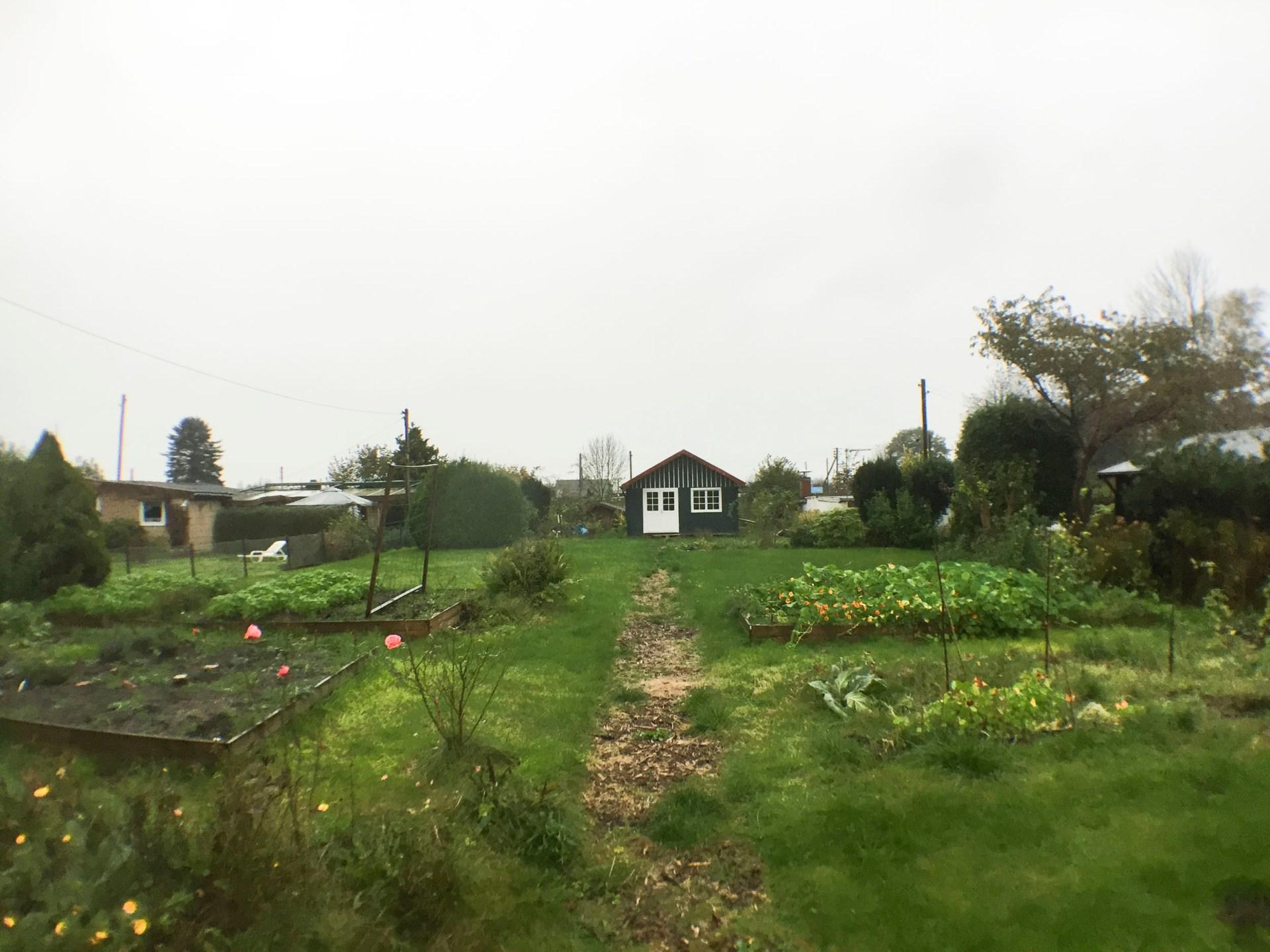 Blick in den Novembergarten.