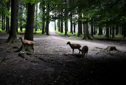Tierpark, Wildpark, München, Ausflugstipp mit Kindern, Herbstausflug Bayern